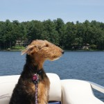 Sydney enjoys the summer lake ride. ©Mike Howard, 2012